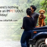 CollarFolk_pet friendly holidays