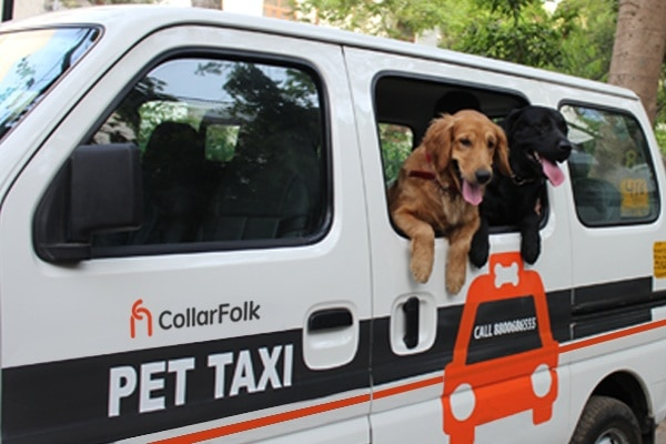 Collarfolk_Pet-Taxi-Images-2