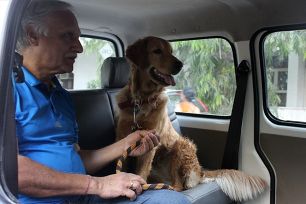 Collarfolk_Pet-Taxi-Images-4
