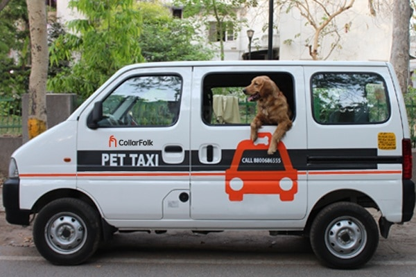 Collarfolk_Pet-Taxi-Images-5