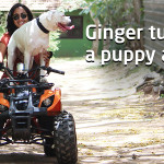 Ginger - Blog Cover